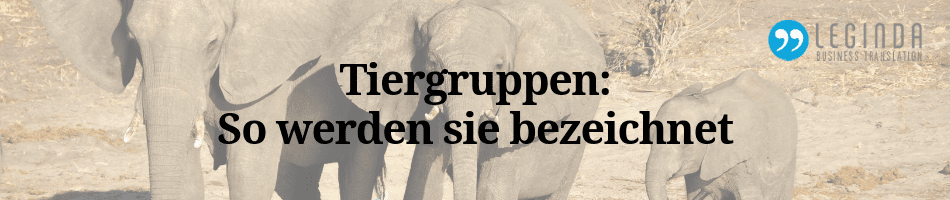 Tiergruppen Blog